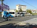 Corredor de ônibus da Av das Amoreiras - panoramio - Paulo Humberto (2).jpg