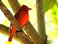 Costa Rica 2.DSCN7683-new (31129745155).jpg