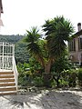 Costa d'Oneglia - panoramio.jpg