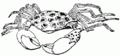 Crab Drawing.png