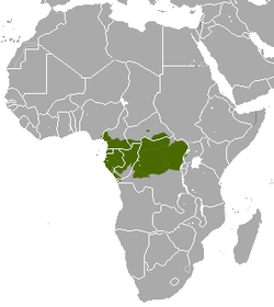 Crested Mona Monkey area.png