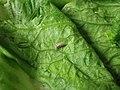 Critter on Green Back (43886391772).jpg