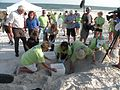 Crowd on beach during excavation of turtle eggs.jpg