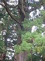 Daimonzaka8621.JPG