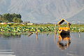 Dal Lake's sunset tour on a shikara - Srinagar (9967093983).jpg