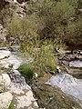 Dare Gahan Spring - panoramio.jpg
