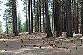 Davis Creek Park - panoramio (23).jpg