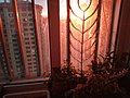 Dawn for my 24th floor Balcony-plants.jpg