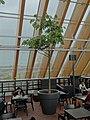 De Boekenberg - Spijkenisse -april 2012- (6970236366).jpg