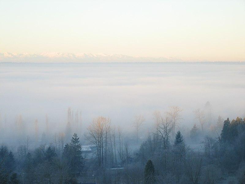 File:December Fog 01.jpg