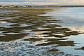Deception Bay - Where has the sea grass gone (27999394522).jpg