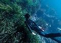 Depths of algerian sea.jpg