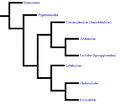 DermapteraGraph2.png