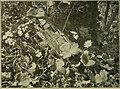 Die Pflanzendecke Österreich-Ungarns. Auf Grund fremder und eigener Forschungen geschildert (1914) (20751780278).jpg