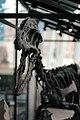 Dinosaur (349846296).jpg