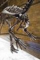 Dinosaur arms (26198283248).jpg
