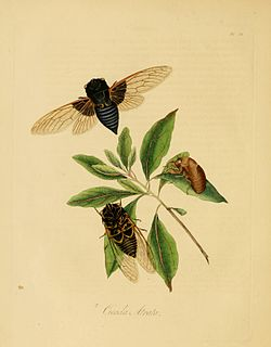 Donovan - Insects of China, 1838 - pl 15.jpg