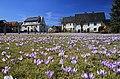 Drebacher Krokuswiesen..2H1A0691WI.jpg