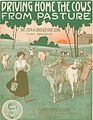 Driving home the cows from pasture 1911.jpg