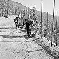 Druivenplukkers aan het werk, Bestanddeelnr 254-4144.jpg