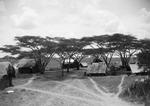 ETH-BIB-Camp Serengeti-Kilimanjaroflug 1929-30-LBS MH02-07-0503.tif