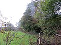 Edge of Berrydown Wood - October 2014 - panoramio.jpg