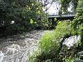 Eerste River from De Oewer.JPG