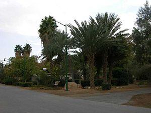 Ein Hatzeva - Image: Ein Hatzeva palmtrees