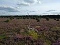 Einsamer kleiner Birkenstamm in der Heide.jpg