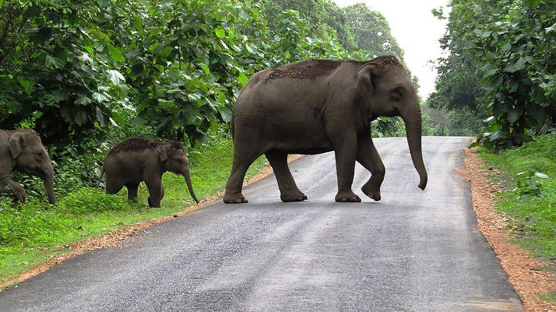 File:Elephant crossing road.jpg