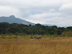 Elephants in Lopé National Park.JPG