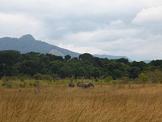 Western Congolian forest–savanna mosaic