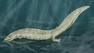Phanerozoic - Eogyrinus (an amphibian) of the Carboniferous