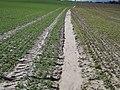 Erosion Akkumulation012.JPG