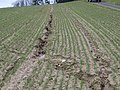 Erosion Fahrspuren017.JPG