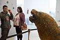 Escuelas de todo el pais visitan el Museo Malvinas (20135798989).jpg