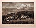 Eugène delacroix, tigre del bengala, 1829, litografia.jpg