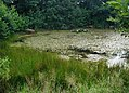 Eutrophic pond.JPG