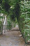 exterieur overzicht beuken loofgang langs oostelijke tuinmuur - berkel-enschot - 20001225 - rce