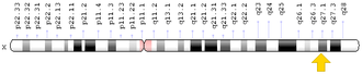 Factor IX - In human, the F9 gene is located on the X chromosome at position q27.1.