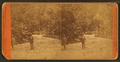 Fairmount Park, Philadelphia, from Robert N. Dennis collection of stereoscopic views 3.png