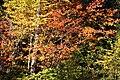 Fall Foliage (1450008118).jpg