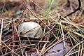 Fall Mushroom (15436263786).jpg
