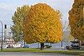 Fall in Penticton - panoramio.jpg