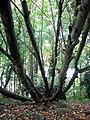 Fallen tree - geograph.org.uk - 1031134.jpg