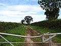 Farm road to Coldmoor Plantation - geograph.org.uk - 571291.jpg