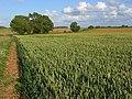 Farmland, Monxton - geograph.org.uk - 480925.jpg