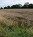 Farmland near Brockey Farm - geograph.org.uk - 941316.jpg