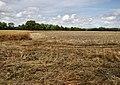Farmland north of Shelter Belt - geograph.org.uk - 1431662.jpg