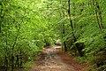 Fawe Park - panoramio.jpg